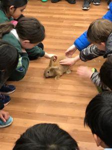 Pets at Home visit
